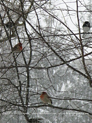 Finches and juncos in the snow